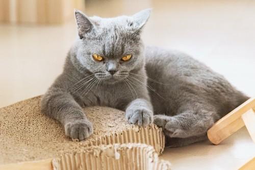 爪とぎの上で怒った表情で見つめる猫