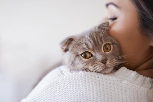 女性に抱かれたグレーの猫