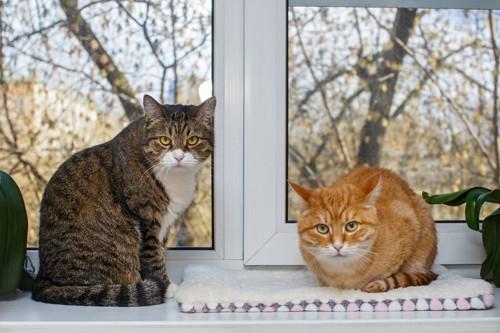 座る猫と香箱座りの猫