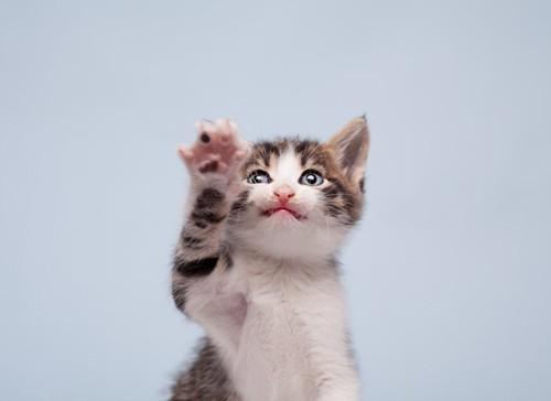 ひっかく子猫