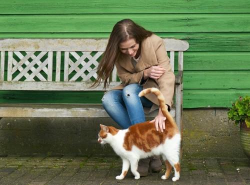猫の尻尾の付け根を撫でるベンチに座った女性