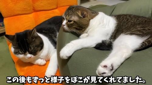 横になる2匹の猫