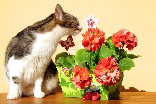 赤い花の匂いを嗅ぐ猫