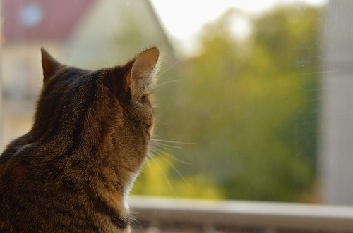 窓の外を見つめる猫の後ろ姿