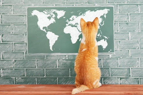 地図を見る猫
