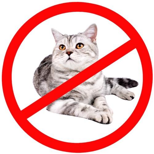 禁止マークと猫