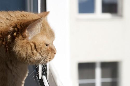 窓の外を見つめる猫の横顔