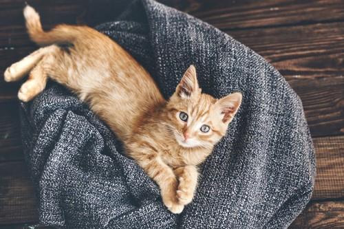 上を見上げる茶色の毛並みの子猫