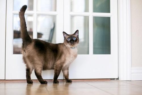 尻尾を高くあげて待っている猫