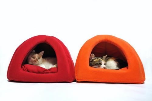 色違いのドーム型ベッドに入っている2匹の猫