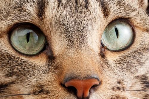目やにの付いている猫のアップ