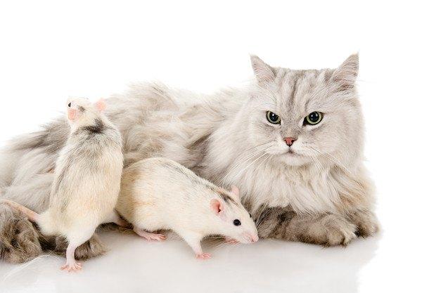 猫とネズミ二匹