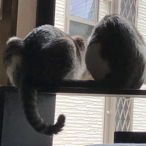 まんまるなお尻の猫2匹