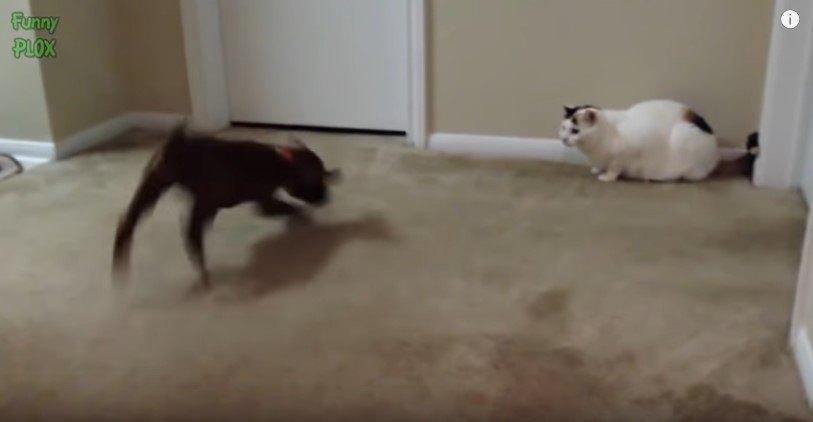 バタバタする犬