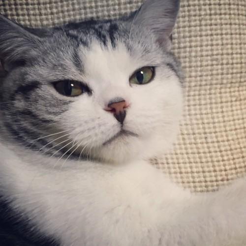 愛が深まりつつある我が家の猫