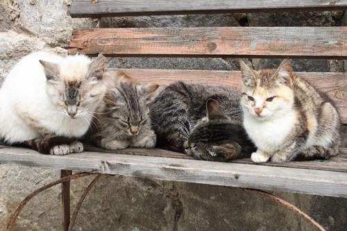 集まる猫たち
