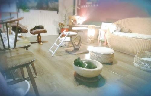 猫カフェ猫茶の店内全景