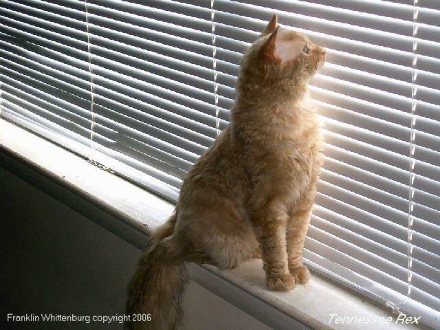 窓際に立つテネシーレックス