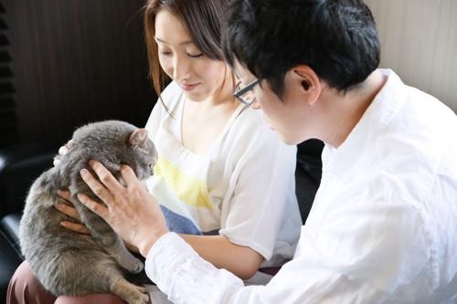 猫を触る男性と女性
