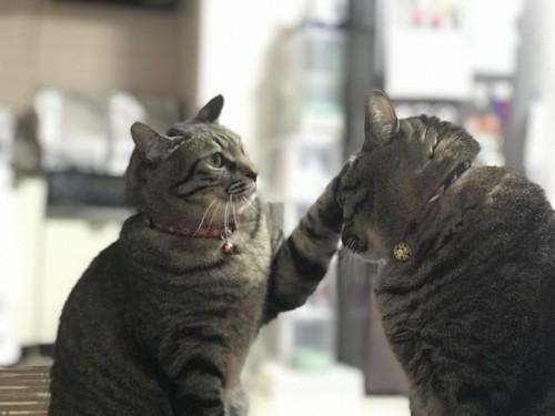 #食べすぎを制する猫#