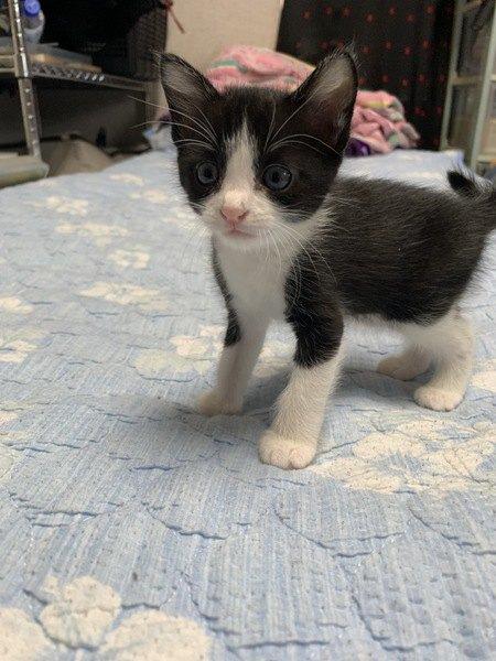布団の上に立つ子猫