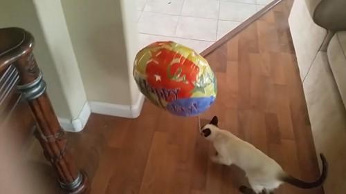 風船をくわえる猫