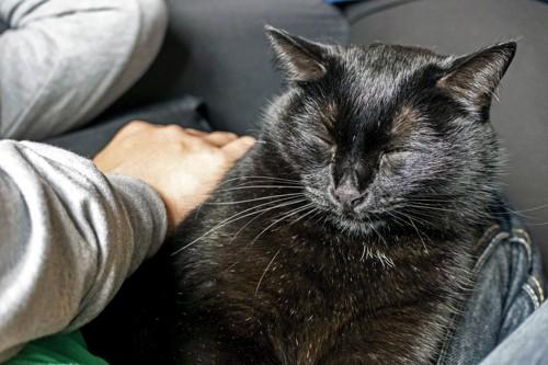 猫の背中を撫でる人