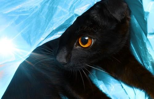 青いビニールの中の黒猫