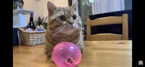 カリカリ入りボールの前に座る猫