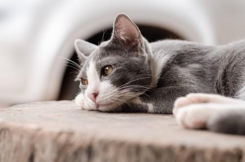 元気のなく寝転がる猫