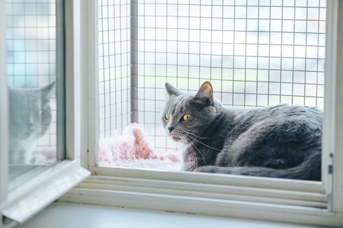 ネットの付いた窓辺にいる猫