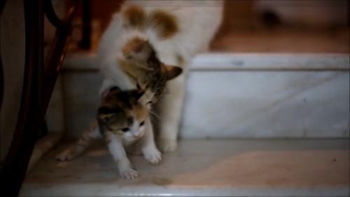 子猫をくわえる