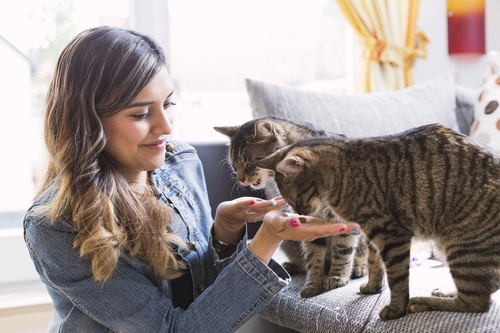 女性と戯れる猫