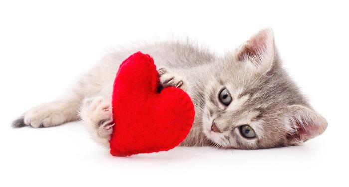 ハートマークを抱える子猫の写真