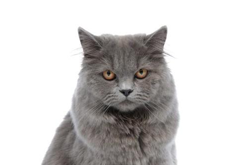 臭いと訴える猫