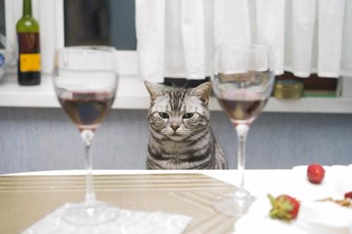 ワイングラス2つとアメショー