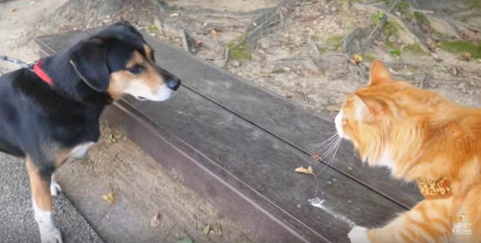散歩中に犬と遭遇したコハク