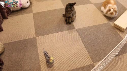 インコと猫とうさぎ