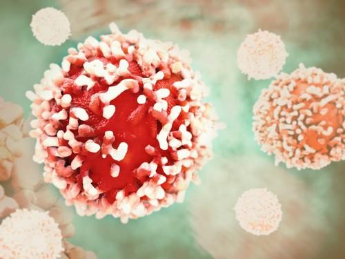 細胞イメージ
