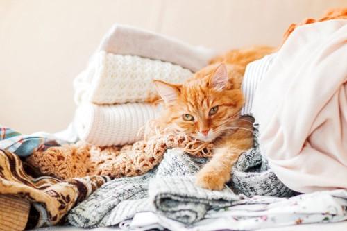 洋服の上にいる猫