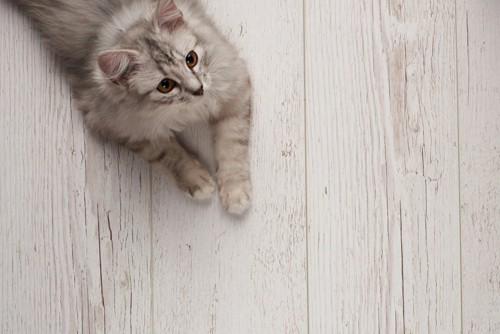 フローリングの上にいる猫