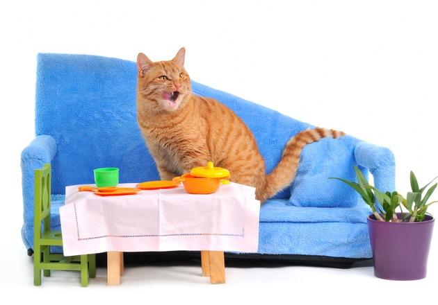 ミニチュアの家具に囲まれている猫