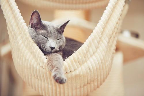 ハンモックの上で熟睡しているロシアンブルー
