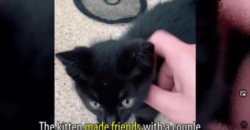 撫でられる黒猫