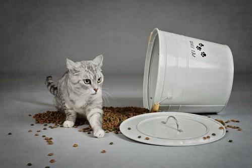 撒き散らされたご飯と猫