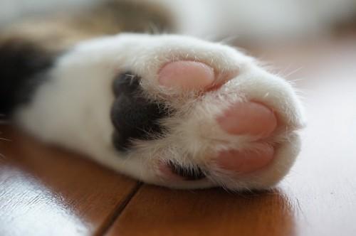 床の上の猫の足のアップ 黒とピンクの肉球