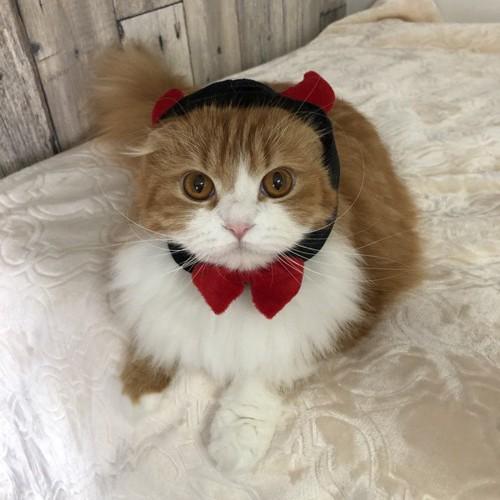 デビル帽子をかぶった猫