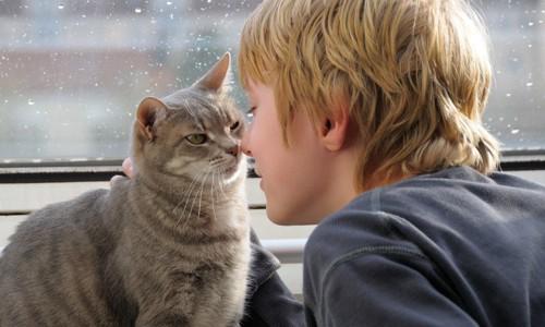 男の子に顔を寄せる猫