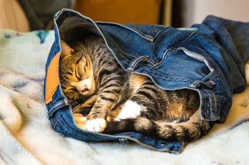 デニムの中で寝る猫