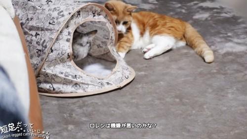 ハウスの中の猫と外の茶白猫